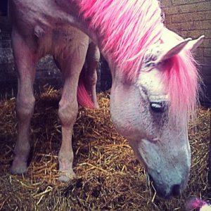 dag-van-de-pony